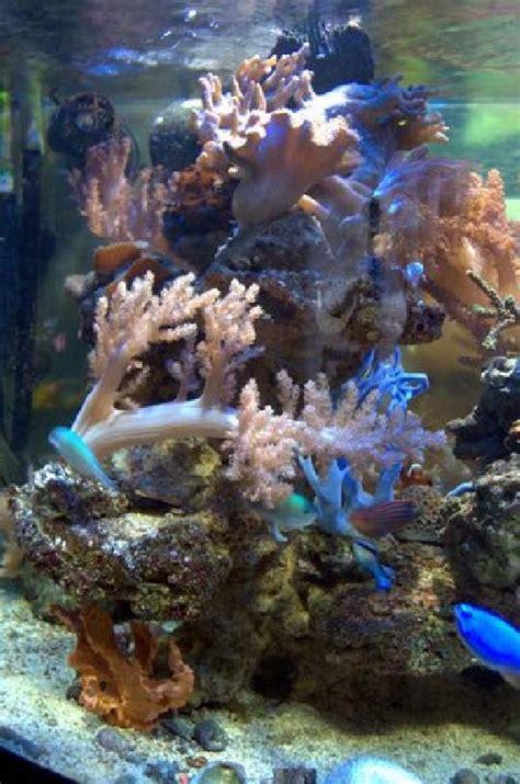r 233 cifal aquariums de 1 224 2 m aquaroche