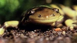 Cute Salamanders | www.pixshark.com - Images Galleries ...