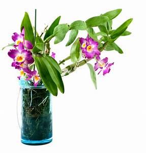 Pflanzen Die Wenig Wasser Brauchen : orchideen im glas halten und richtig pflegen ~ Frokenaadalensverden.com Haus und Dekorationen