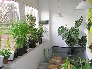 Pflegeleichte Pflanzen Für Die Wohnung : schimmel in der wohnung mein erfahrungsbericht majas ~ Michelbontemps.com Haus und Dekorationen