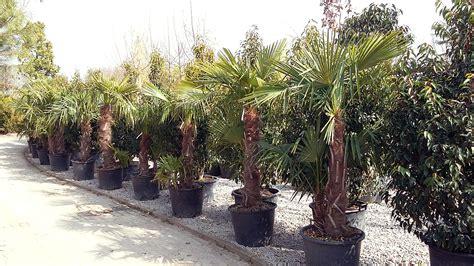 mediterrane bäume winterhart mediterrane pflanzen winterhart garten mediterran pflanzen mediterrane pflanzen winterhart