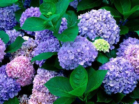Garten Schatten Pflanzen by Farbenfrohe Schattenpflanzen F 252 R Ihren Garten