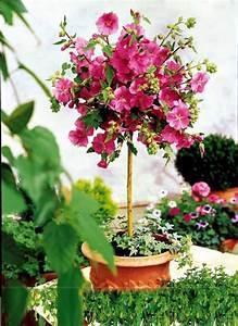Arbuste Plein Soleil Longue Floraison : les 36 meilleures images du tableau mini plantes pour ~ Premium-room.com Idées de Décoration