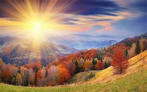 Autumn Forest Sunrise Wallpapers - 2560x1600 - 1733844