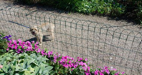 keep dogs out of garden and cat deterrents keep pets out gardener s supply