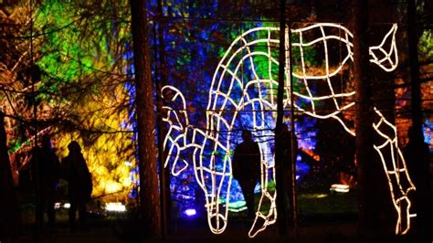 town expecting no christmas lights has twinkle of hope