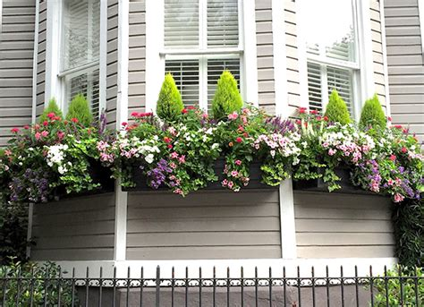 summer windowbox ideas grow beautifully