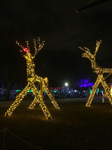 brookfield zoo s lights festival real magic