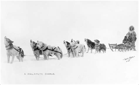 Iditarod Trail Race Conceived 50 Years Ago - Aunt Phil's Trunk