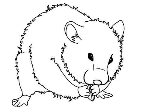 Coloring Pages Of Hamsters - Democraciaejustica