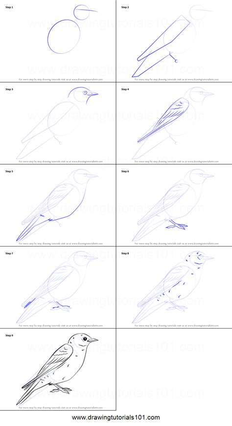 how to draw an eastern bluebird printable step by step