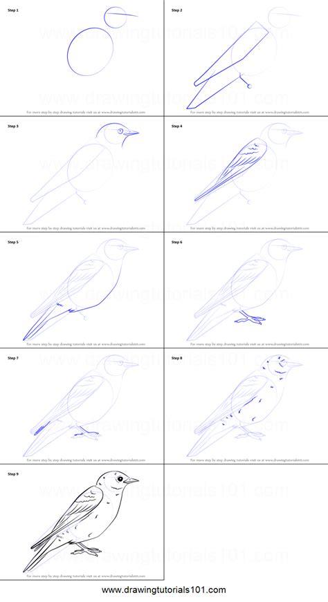 draw  eastern bluebird printable step  step