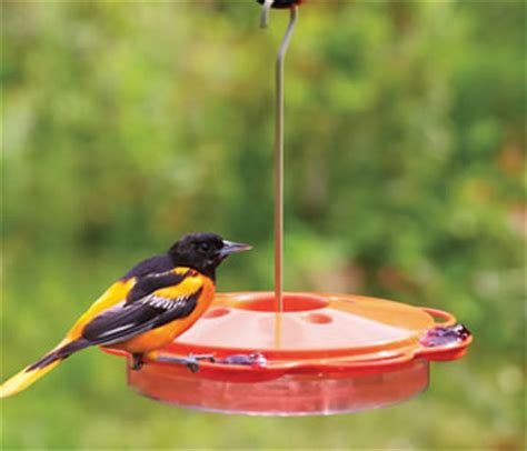 duncraft com multi use oriole nectar feeder