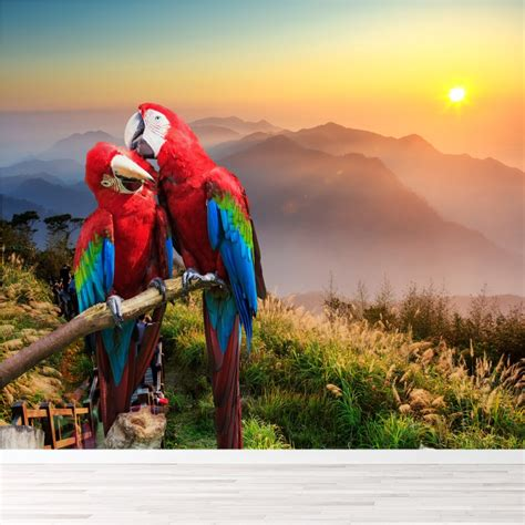 red blue parrots wall mural sunset mountain photo
