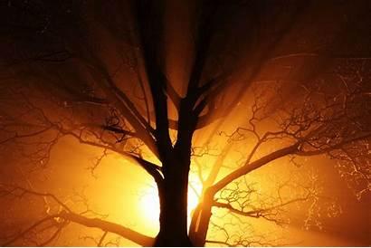 Dark Nature Bright Abstract Mist Lights Yellow