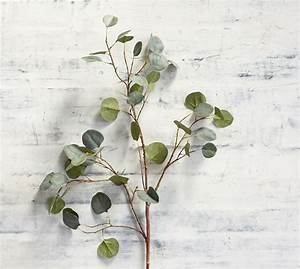 Faux Silver Dollar Eucalyptus Branch Pottery Barn