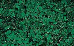 Desherbant Mauvaise Herbe : produit anti mousse pelouse de bayer d sherbant mauvaise ~ Premium-room.com Idées de Décoration