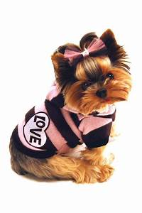 Yorkshire Terrier Puppy Dogs Yorkie Puppy Dog Clothing ...