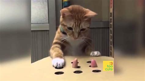 beste lustige katzen und hunde  katze schlaegt fehl