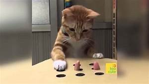 Katzen Bilder Lustig lustige katze top 10 katzen fails 3