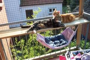 kratzbaum balkon balkon zum katzenparadies seite 2