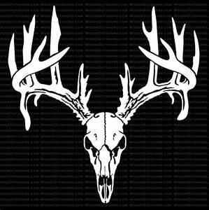 Double Droptine Whitetail Buck Skull - Deer Hunting Window