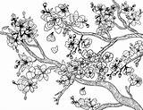 Blossom Cherry Coloring Adult Tree Pages Blossoms Printable Flower Coloringgarden Trees Pdf Sheets Colouring Japanese Garden Flowers Template Spring Painting sketch template