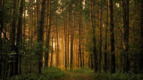 bosque forest fondos de pantalla background pc