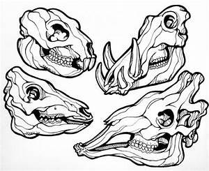 Animal Skulls Line Art by sammo371 on DeviantArt