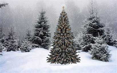 Tree Christmas Desktop Background Amazing Lights Wallpapertag