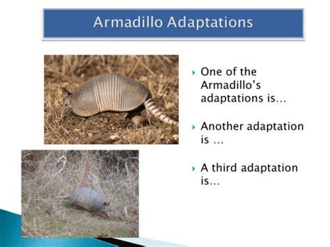 animal adaptations armadillo powerpoint activity