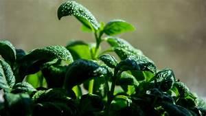 Chlorella  Benefits Of Nature U2019s Best Detoxifier