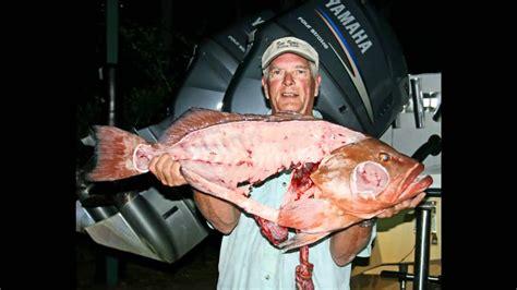 fishing nc topsail island grouper