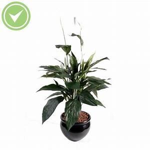 Plantes Pas Cher Paris : grande plante verte pas cher fleuriste bulldo ~ Dailycaller-alerts.com Idées de Décoration
