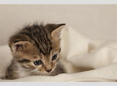 Kittens Pictures Gallery Wallpaper And Free Download