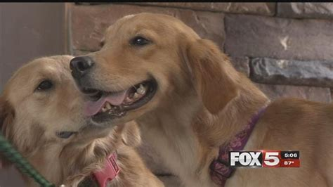 golden retrievers rescued  chinese dog meat market