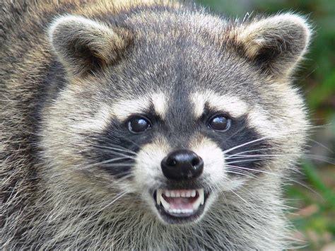 was fressen mäuse am liebsten animalorama animal pictures tierbilder