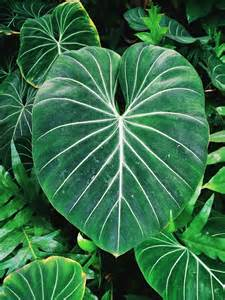 Aesthetic Leaf Tropical Plants