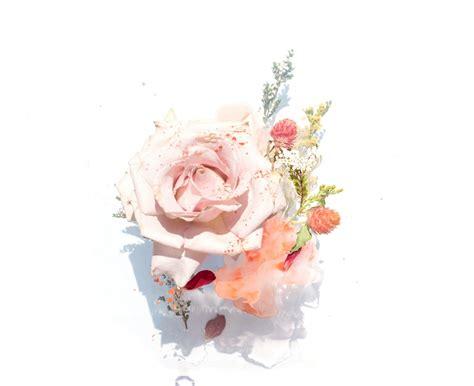 pink roses illustration photo  flower image  unsplash