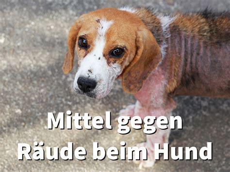 wirksame mittel gegen raeude beim hund  hilft gegen milben