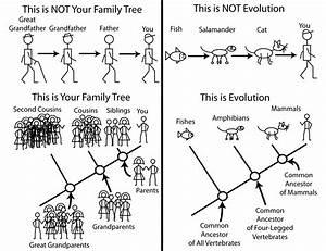 Plant Evolution Diagram