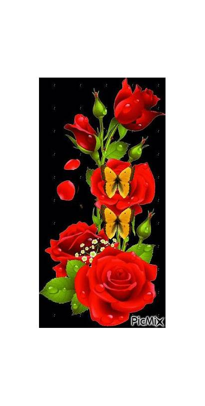 Picmix Flowers Flores Rose Morning Flower Wallpapers