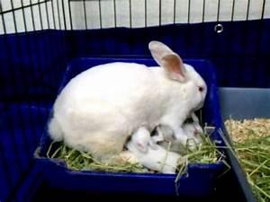 Mama bunny feeding her babies - YouTube