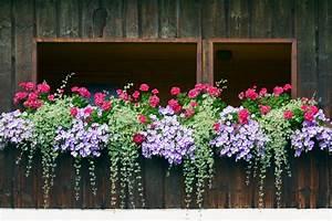 Blumen Für Den Balkon : 40 fenster und balkon blumen box ideen fotos home deko ~ Lizthompson.info Haus und Dekorationen