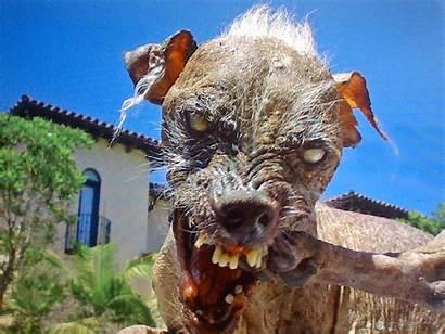 Ugly Dog Ugliest Want Elwood Worlds Sable