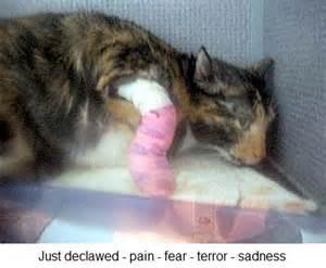 declaw cat declawing cats poc
