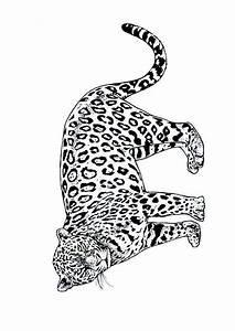 Dessin Jaguar Facile : coloriage jaguar coloriage sur ~ Maxctalentgroup.com Avis de Voitures