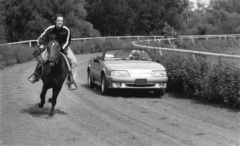 ferrari horse vs mustang horse 1991 ford mustang car vs mustang horse comparison