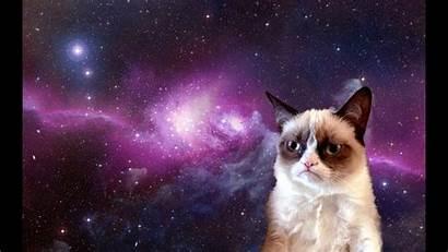 Cat Grumpy Jokes Meme Funny Space Desktop