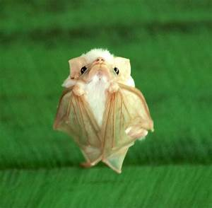 These baby bats are just so adorable